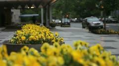 City Flowers Stock Footage