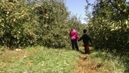 Children walking in an orchard Stock Footage