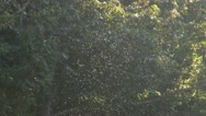 Gnats Stock Footage