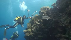 Diver taking picture of turtle Stock Footage