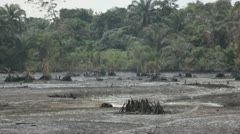 In Africa, Nigeria a mangrove forest is polluted with oil Stock Footage