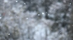 Winter Scene, Storm Snow in the City, Park Trees, Christmas, Blizzard Stock Footage