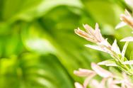 Summer plant with blurred green background Stock Photos