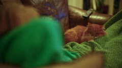Cat lap sleeping sleep Stock Footage