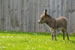 little donkey - stock photo