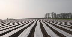 Stock Photo of zebra field