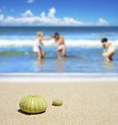 Beach scene with two dead sea urchin shells Stock Photos