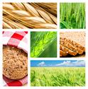 Stock Photo of collage of wheat and wheat products