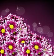 Beautiful spring daisy flowers Stock Photos