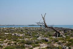 Rocky island and old trunk. - stock photo