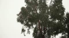 Windy Tree Stock Footage