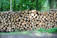 Stock Photo of log pile