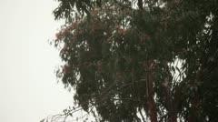 Swaying Tree Stock Footage