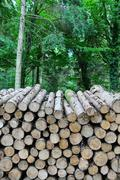 Stock Photo of forest log pile