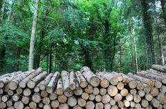 Long log pile Stock Photos