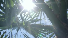 Palm and sun 2 - stock footage