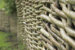 Wattle - stock photo