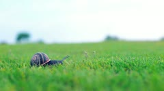 Snail crawling on green grass Stock Footage