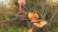 Stock Video Footage of sawing tree
