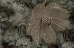 retro style flower(close up) - stock photo