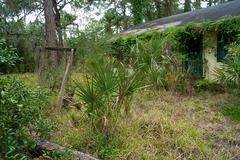 old florida abandoned overgrown home - stock photo