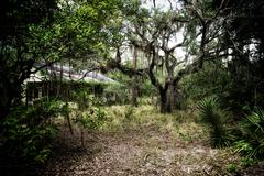 spooky old abandoned home in florida forest - stock photo