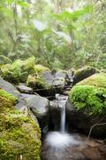 Dense Fog In Ecuador Cloud Forest Stock Photos