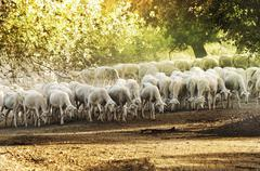 Stock Illustration of herd sheep