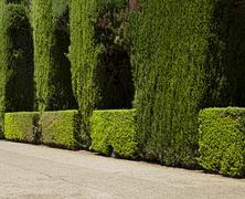 garden with green bushes - stock photo