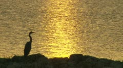 Egret on the Water Stock Footage