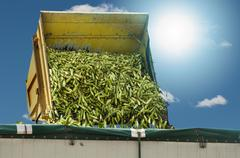 harvester unloads harvested corn - stock illustration
