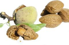 almonds and leafs - stock photo