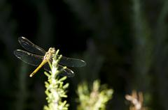 Dragonfly and green background Stock Photos