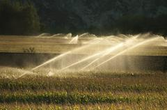 irrigation systems on sunset - stock photo