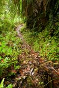 Stock Photo of Walkway In The Amazonian Rainforest After Heavy Precipitation