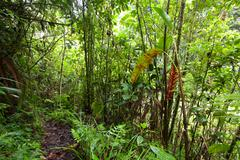 Dense Forest In Sangay National Park In Ecuador - stock photo