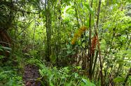 Stock Photo of tropical forest