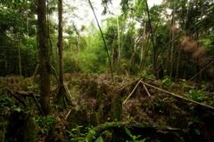 Stock Photo of Natural Labyrinth In Dense Amazonian Rainforest