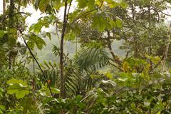Dense Vegetation In Ecuadorian Basin Of Amazon River - stock photo