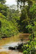 Dense Vegetation In Ecuadorian Basin Of Amazon River Stock Photos