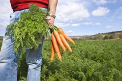 Porkkana maanviljelijä porkkana kentän tilalla Kuvituskuvat