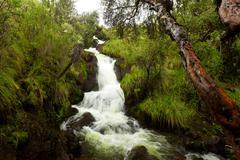 Stock Photo of Small Waterfall In Ecuador