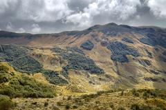 High Altitude Vegetation In Ecuadorian Andes Rich Vegetation With Different - stock photo