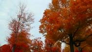 Fall Foliage 2769 Stock Footage