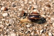Stock Photo of Snail