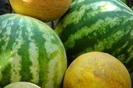 Stock Photo of Mellons