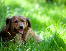 Dog in Grass Stock Photos