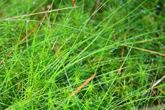 Stock Photo of Grass in the Morning