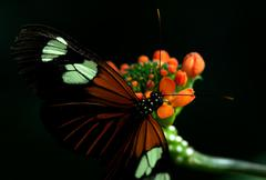 Exotic Butterfly Feeding On A Colorful Flower Shot In Low Ambient Light In The - stock photo