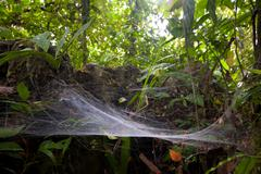 Stock Photo of Large Size Spider Web In The Amazonian Rainforest